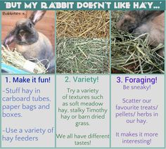 Tips to get your bunny to eat more hay. It's never a good idea to stick with only one type of hay, like us rabbits get sick of lack of variety.