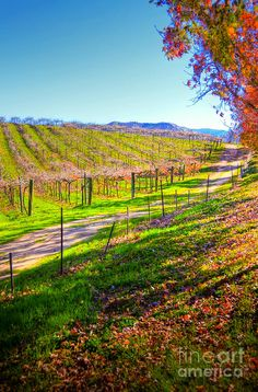 ✯ Winery Road
