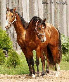 I can honestly say these beautiful animals are and always will be my true love!!!!!!