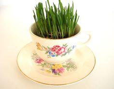 Grow grass in vintage tea cups.