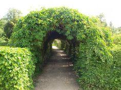 vine covered walkway - romantic perfection!