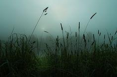 Владимир Белов / Pentax K-5 / природа, режимное время, туман