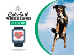 Per avere il tuo #Cane sempre in forma, occorre una dieta equilibrata e la giusta dose di cibo!. Calcola qui la #razione giornaliera di #cibo corretta, inserisci i dati nel #calcolatore http://www.mongrelpet.com/boot/calculator.php?id_cat=35