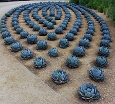 set a collection garden styles to support get you started design the garden you've always dreamed about. Succulent Landscaping, Succulent Gardening, Cacti And Succulents, Planting Succulents, Backyard Landscaping, Landscaping Ideas, Backyard Ideas, Modern Landscaping, Cactus E Suculentas