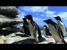 ▶ Rockhopper Penguins Hop to the Top - Penguins: Spy in the Huddle - Episode 1 Preview - BBC One - YouTube