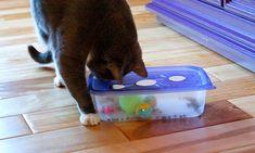 7 DIY-tips: Så gör du enkla och roliga kattleksaker. Vill du pyssla en rolig leksak till din katt? Här är 7 enkla DIY-tips på vad du kan göra med det du har där hemma! #cat #animals #diy #play #toy