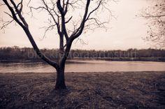 barren trees and river winter scene by BlackFedoraArtnStuff, $12.00