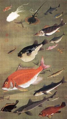 """Itō Jakuchū's """"Reptiles and Insects: Fish"""" (18th century)"""