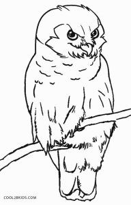 Free Printable Owl Coloring Pages For Kids Cool2bKids   Home ...