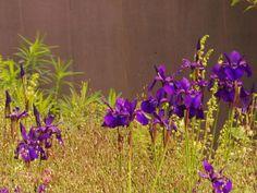 Contrasten - Denkers in TuinenDenkers in Tuinen   Ontwerpers van stijlvolle en tijdloze tuinen