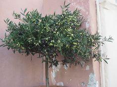 paradies und das: Santorini - Griechenland Simple, Plants, Life, Santorini Greece, Paradise, Plant, Planets