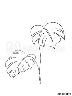 Monstera Tropical leaf