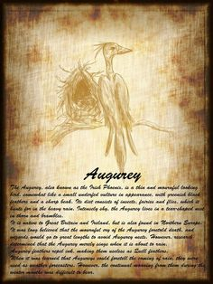 Harry Potter Creatures  - Imgur Harry Potter Part 2, Harry Potter Book Covers, Harry Potter Facts, Harry Potter World, Magical Creatures Harry Potter, Hp Book, Harry Potter Halloween, Fantastic Beasts And Where, Livros
