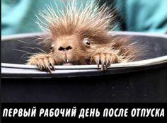 Я в танке... #приколы #животные Psychology, Funny Pictures, Humor, Motivation, Poster, Animals, Smile, Pictures, Funny Pics
