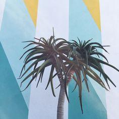 palm sundae / Superba food + bread Venice, CA | alexmichaelmay | VSCO Grid