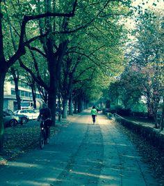 Hamburg walkway Alster