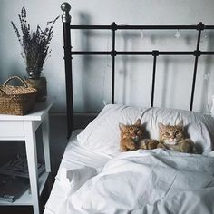 How precious and cute is this? Haha!   #catlovers #cats #cute