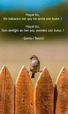 Neşe'nin gözdeleri Sufi, Pretty Pictures, Karma, Allah, Stress, Inspirational Quotes, Motivation, Quotes, Cute Pics