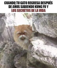 Crazy Funny Memes, Funny Texts, Funny Shit, Funny Stuff, Hilarious, Kung Fu, Mundo Meme, Sarcasm Meme, Funny Animals