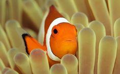 Fotos de animales marinos