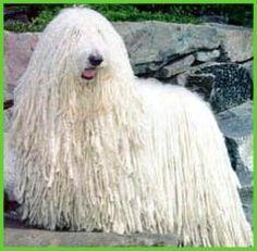 o cão da klin kkkk