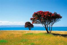 Rejser til New Zealand fakta, New Zealand Art, New Zealand Travel, New Zealand Wildlife, Mesh Christmas Tree, New Zealand Adventure, New Zealand Landscape, Peep Show, Flower Landscape, The Beautiful Country
