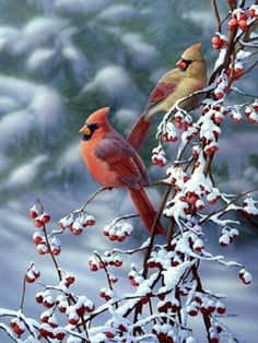 """Cardinals 'n' Snow"" by Bradley Jackson"
