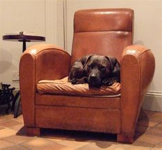 German Dog French Leather Chair