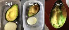 Los aguacates son cremosos, deliciosos y nutritivos, pero no siempre los necesitamos utilizar completamente. Para mantener tus mitades de aguacate verdes, refrigéralos en un recipiente junto a una cebolla cortada.