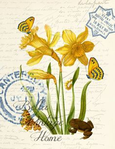 Vintage Illustrations Botanical Yellow Daffodil and Butterflies Print, Pillow, Note Cards – BELLAVINTAGEHOME - Original artwork created from vintage bookplates, etchings Vintage Prints, Vintage Art, Vintage Room, Yellow Towels, Antique Paint, Scrapbooking, Butterfly Print, Vintage Postcards, Vintage Stationary