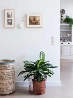 Plant | vtwonen 06-2