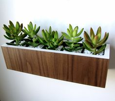 Succulent Planter, Centerpiece, Walnut And White, Desktop Or Wall Hanging Style…