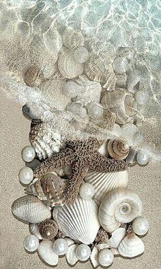 Beautiful shells!