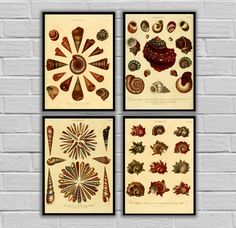 """Vintage Conchology Art - Set of 4 - Print or Canvas - Vintage Seashells Prints - Nautical Wall Art, Antique Beach Decor 266-269 by STANLEYprintHOUSE  12.00 USD  Vintage Conchology Art - Set of 4 - Print or Canvas - Vintage Seashells Prints - Nautical Wall Art, Antique Beach Decor 266-269  This set is available as Prints or Canvas.  ****Prints available in various sizes from 5""""x7"""" - 24""""x36""""**** ****Canvas available in various sizes from  5""""x ..  https://www.etsy.com/ca/listing/46950.."""