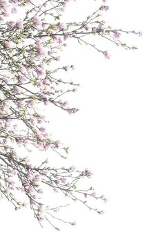 Pretty Backgrounds, Flower Backgrounds, Phone Backgrounds, Wallpaper Backgrounds, Pastel Wallpaper, Lock Screen Wallpaper, Flower Wallpaper, Iphone Wallpaper, Homescreen Wallpaper