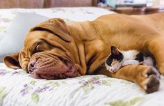 These 20 Cats Think Their Dog Friends are The Best Pillows