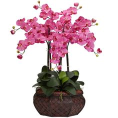 Beautiful dark pink Phalaenopsis Orchid flower arrangement