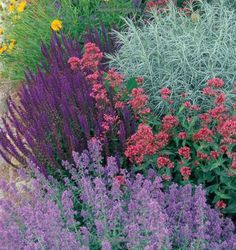 nepeta walkers low, salvia, artemisia, and autumn joy sedum could give you this look. Designer Plant Combinations: 105 Stunning Gardens Using Six Plants or Fewer