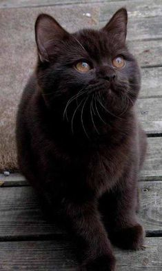 Black cats rule ! #cats #cat