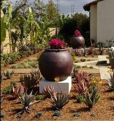beautiful, drought tolerant landscaping