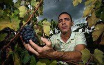 Ocoa inicia primer proyecto agro-turístico desde el vino