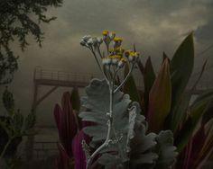 Daniel Shipp – Botanical Inquiry | Graphicine