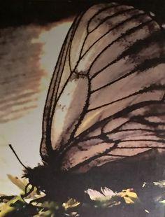 butterfly sketch  art  pinterest  butterfly sketch