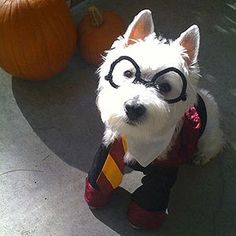 Harry Paw-ter! Check out more of our staff's crazy-cute pets in costume photos here: http://www.rachaelraymag.com/fun-how-to/staffs-crazy-cute-pets-in-costume-gallery/#