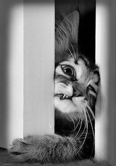 Cats do not like closed doors !  lol