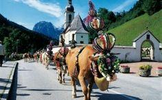 cattle drive, Berchtesgaden