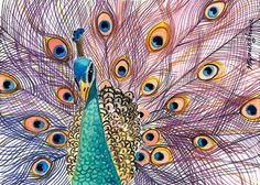 ACEO Limited Edition  Splendid peacock by annalee377 on Etsy