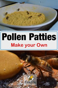 How to make pollen patties. Knowing when to use pollen patties and when to remove them from the hive promotes strong healthy colonies. Bee Feeder, Bee Pollen, Bee Hives, Feeding Bees, Bee Food, Bee Facts, Bee Hive Plans, Beekeeping For Beginners, Bee Supplies