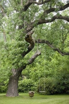 A simple wooden swing hung high above on a sturdy tree limb, will occupy a child for hours.