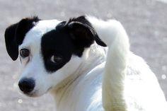 BONDE DA BARDOT: SP: Zoonoses inscreve cães e gatos para castração na Vila Santana, em Sorocaba